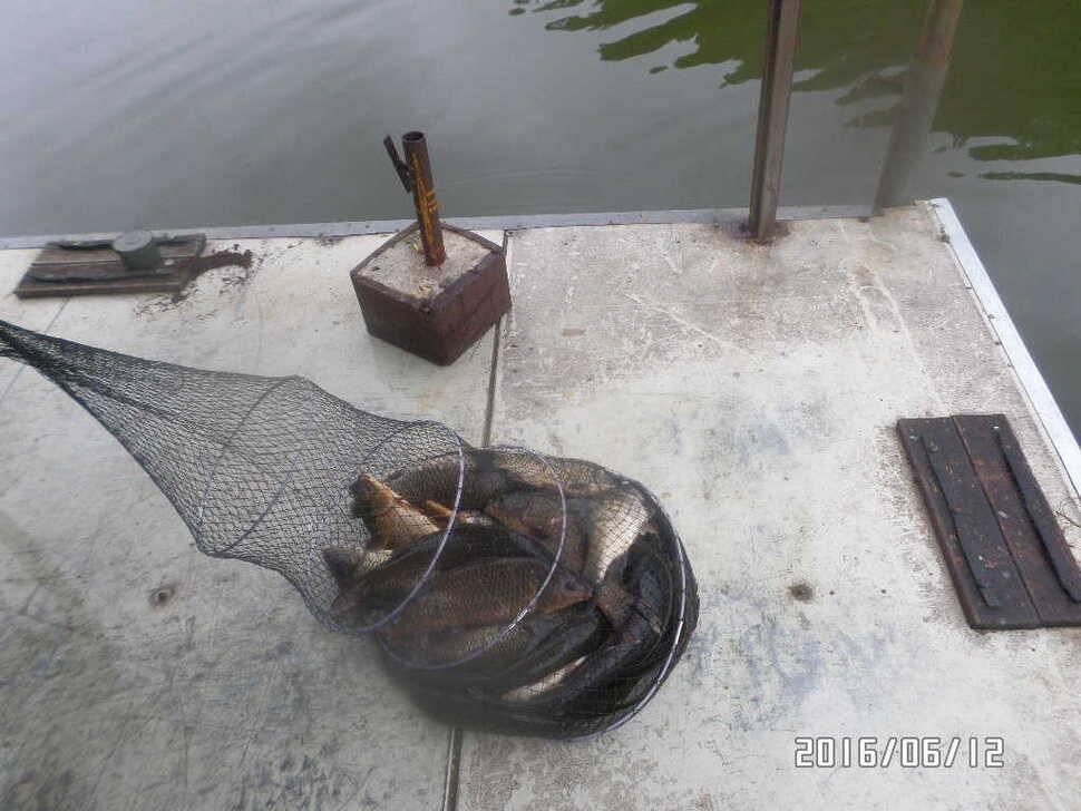 fish_pay_10174894.jpg