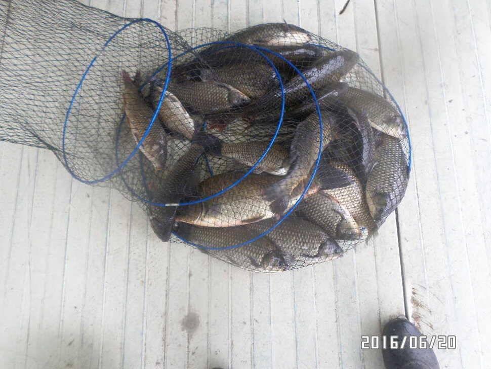fish_pay_10253489.jpg