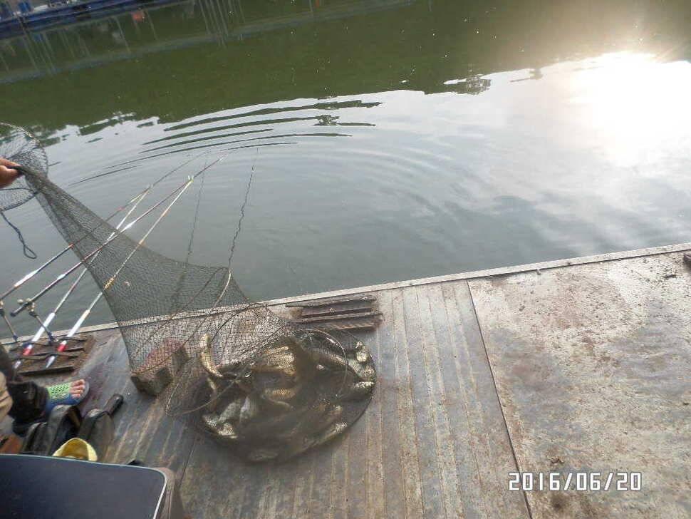 fish_pay_10255079.jpg
