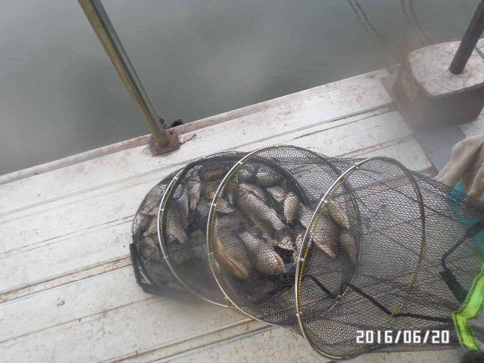 fish_pay_10260247.jpg