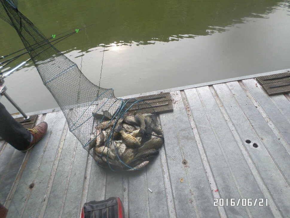 fish_pay_10261171.jpg
