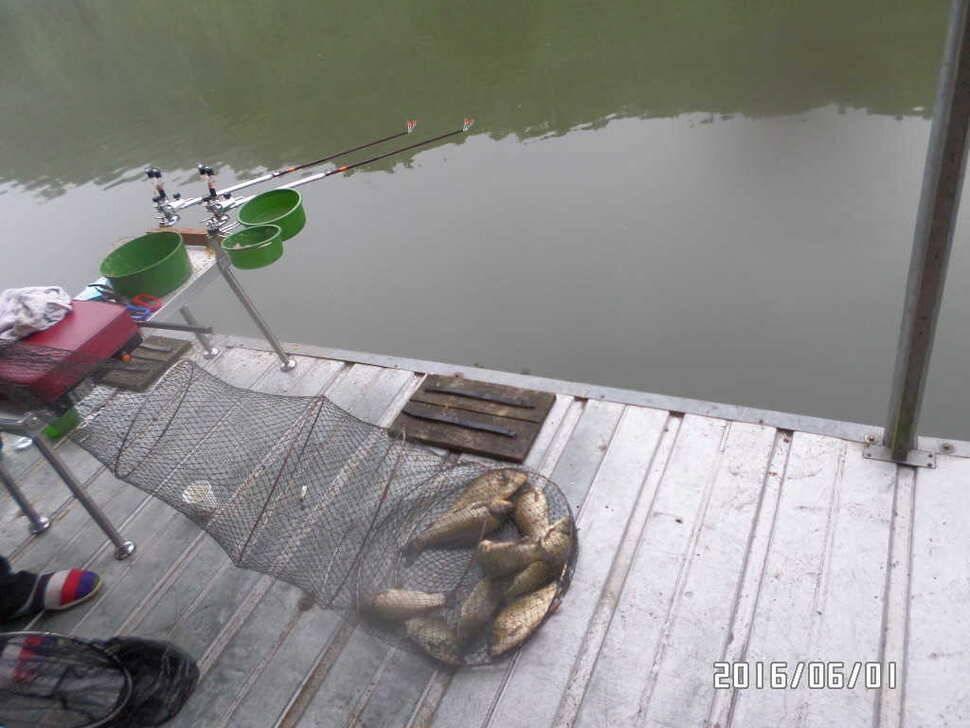fish_pay_10322856.jpg