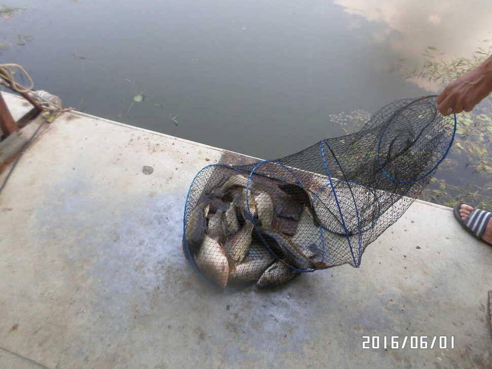 fish_pay_10330673.jpg