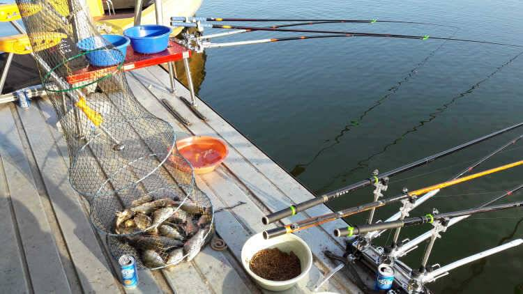 fish_pay_10481183.jpg