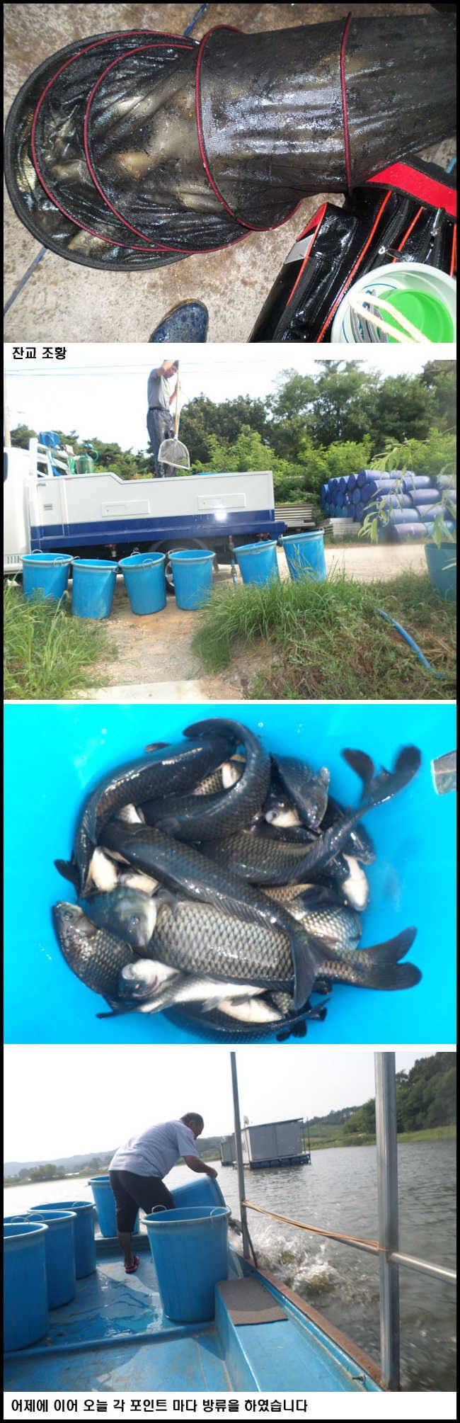 fish_pay_11043830.jpg