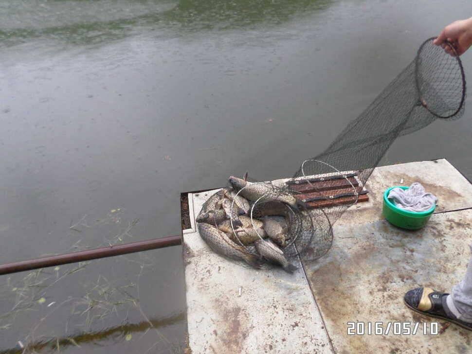 fish_pay_11254867.jpg