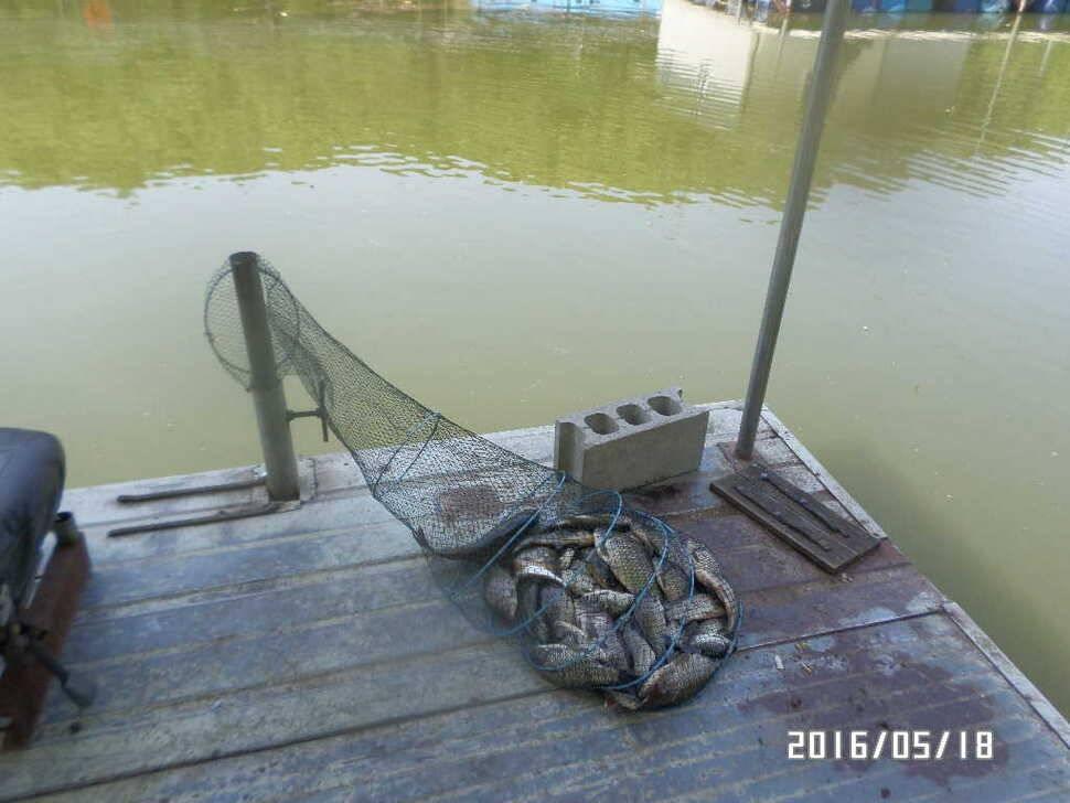 fish_pay_11374571.jpg
