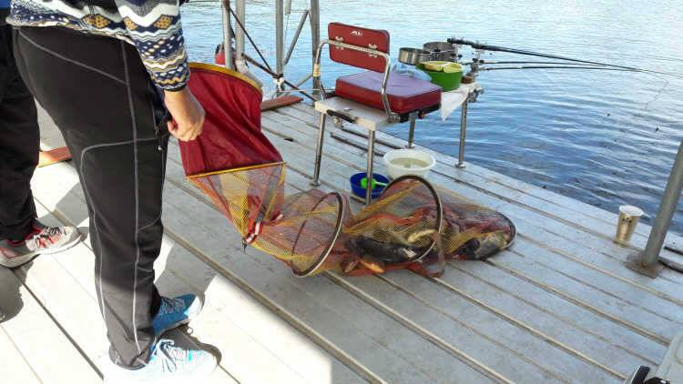 fish_pay_11460777.jpg