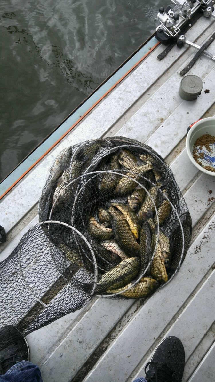 fish_pay_11521256.jpg