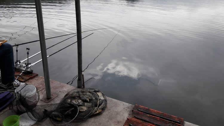 fish_pay_12154621.jpg
