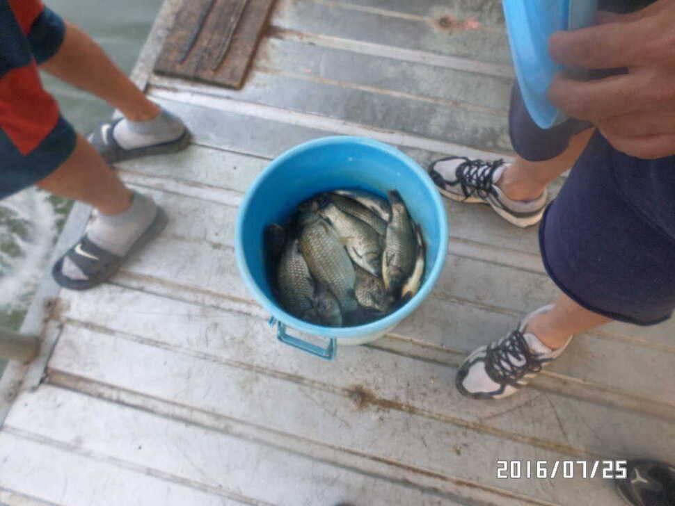 fish_pay_12285291.jpg