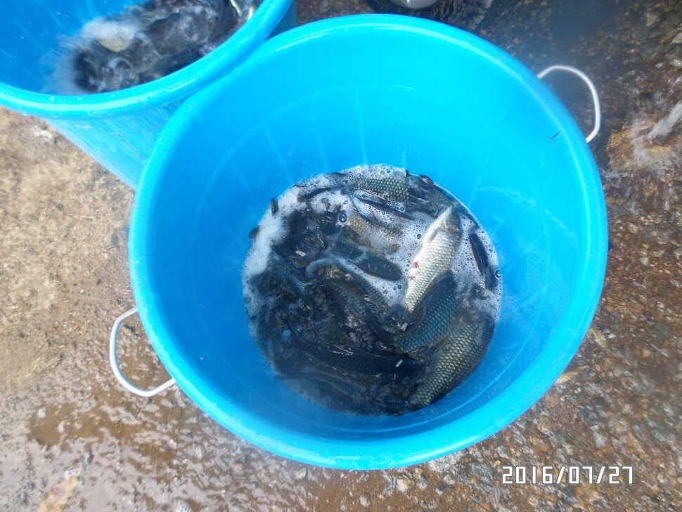 fish_pay_12294145.jpg