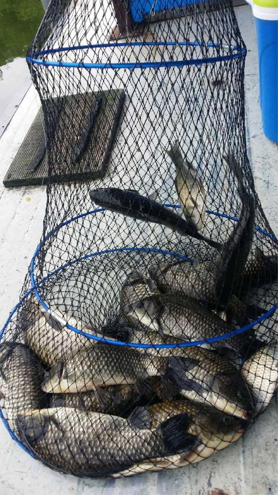 fish_pay_1230126.jpg