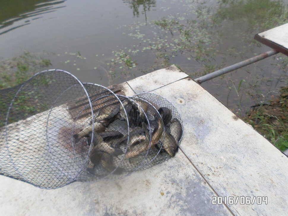 fish_pay_12555846.jpg