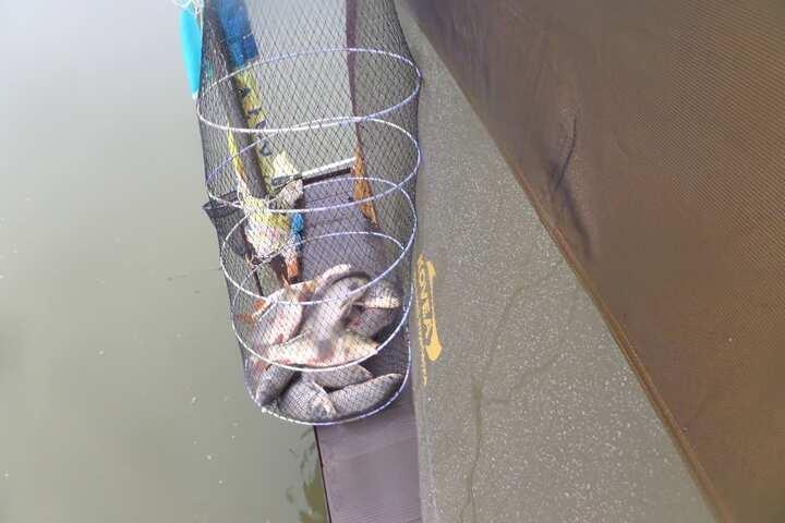 fish_pay_01001556.jpg