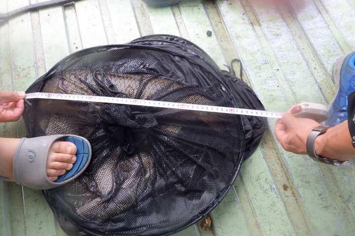 fish_pay_01012056.jpg