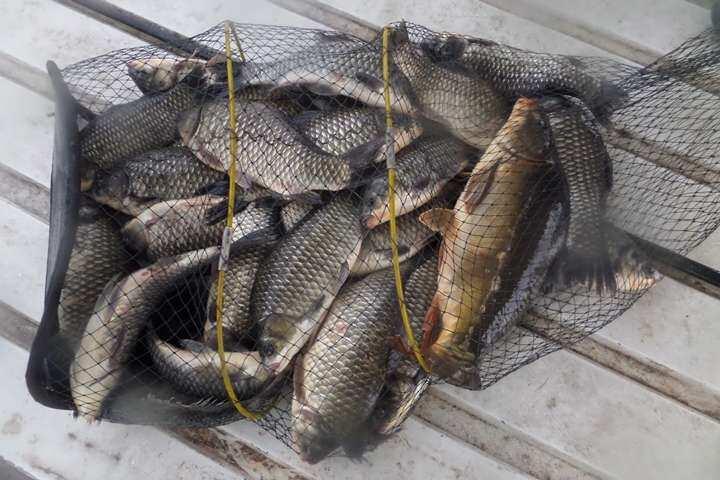 fish_pay_01022949.jpg