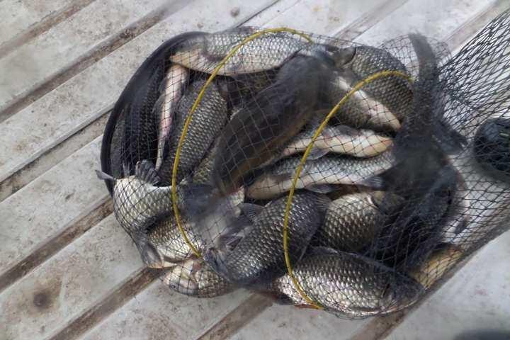 fish_pay_01024179.jpg