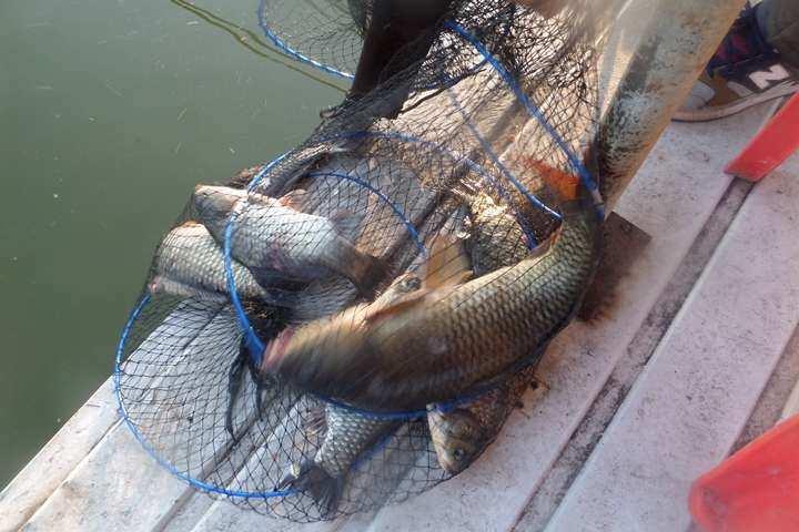 fish_pay_01225629.jpg