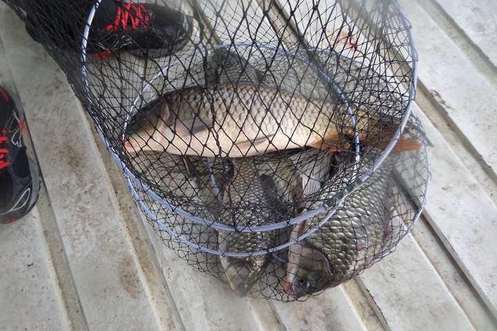 fish_pay_01233113.jpg
