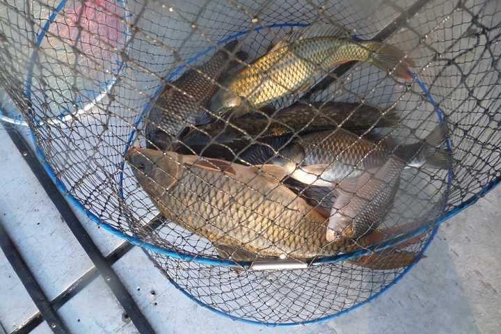 fish_pay_02191620.jpg