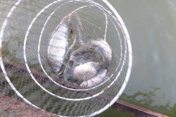 fish_pay_02193361.jpg