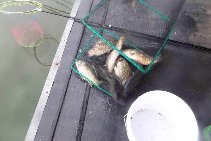 fish_pay_02195729.jpg
