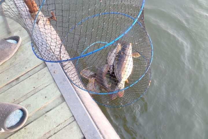 fish_pay_02215227.jpg