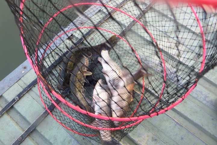 fish_pay_02220362.jpg