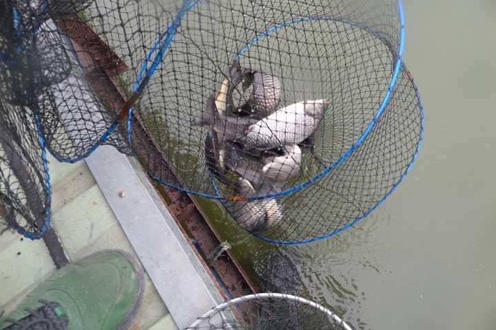 fish_pay_02224612.jpg