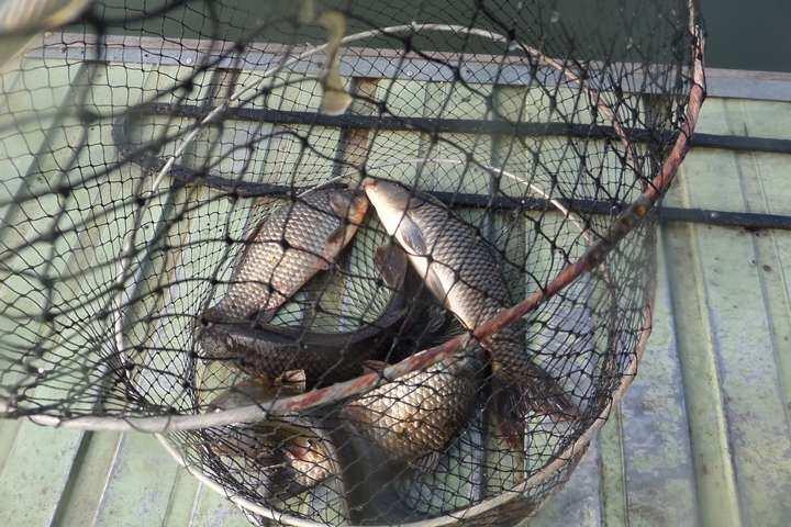 fish_pay_02252818.jpg