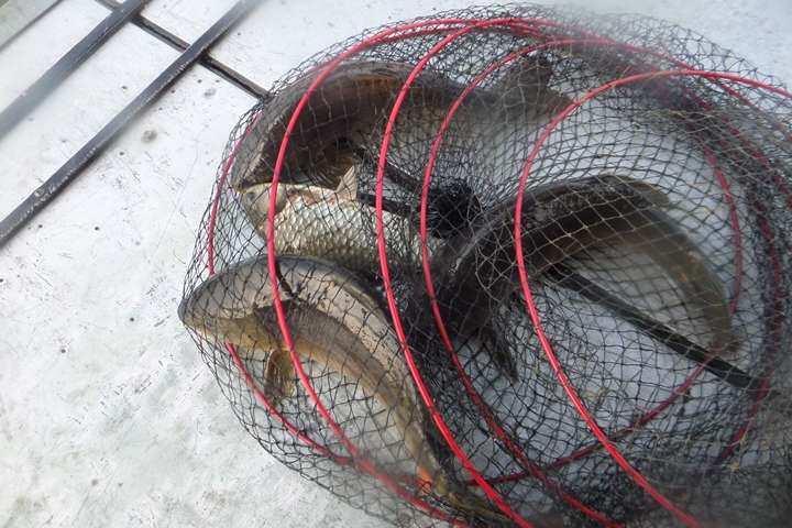fish_pay_02254132.jpg