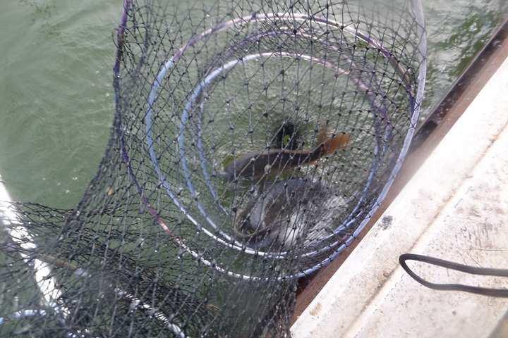 fish_pay_02262943.jpg