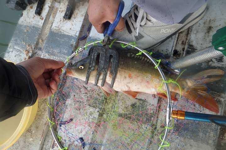 fish_pay_02263278.jpg