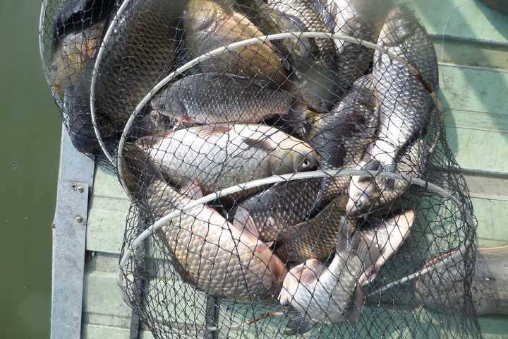 fish_pay_03221421.jpg