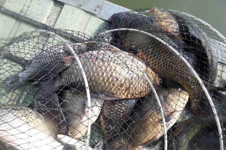 fish_pay_03221832.jpg