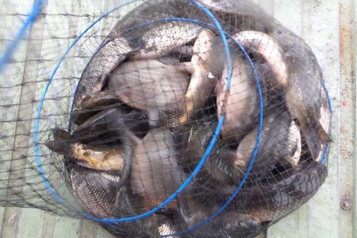 fish_pay_03223535.jpg