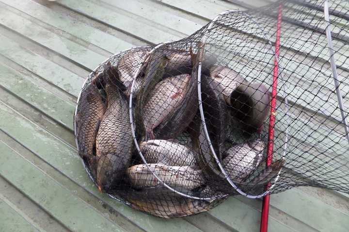 fish_pay_03233168.jpg