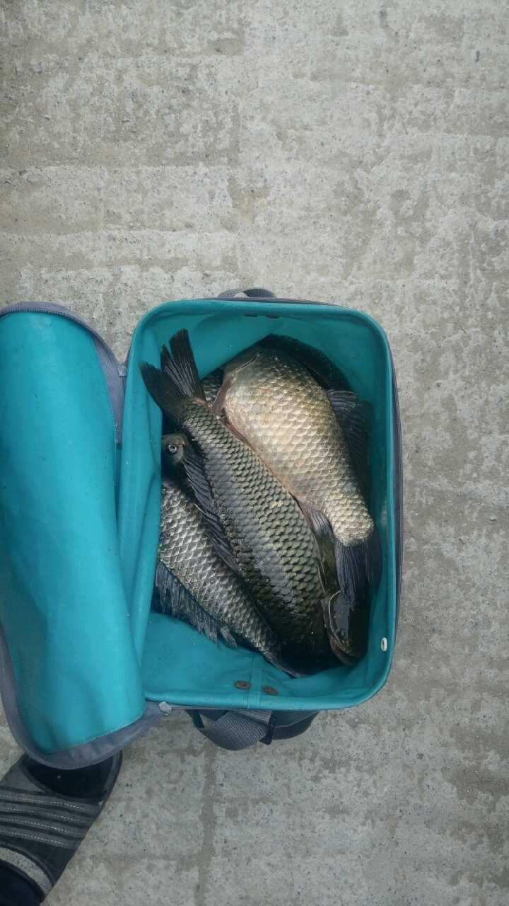 fish_pay_03244191.jpg