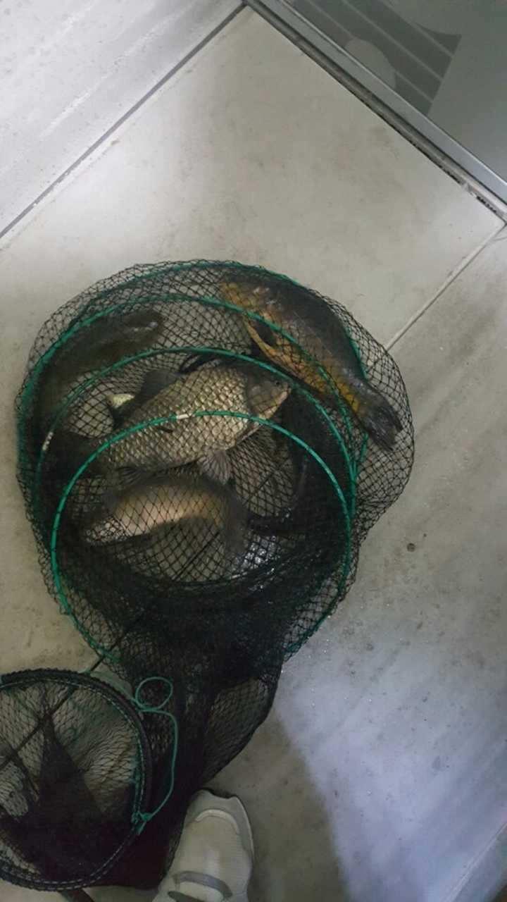 fish_pay_03244530.jpg