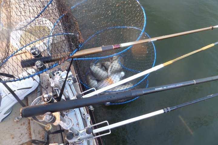 fish_pay_04041787.jpg