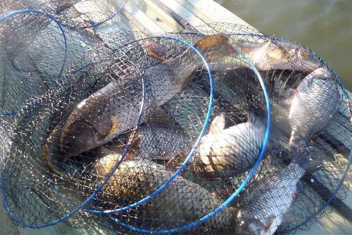 fish_pay_04044562.jpg