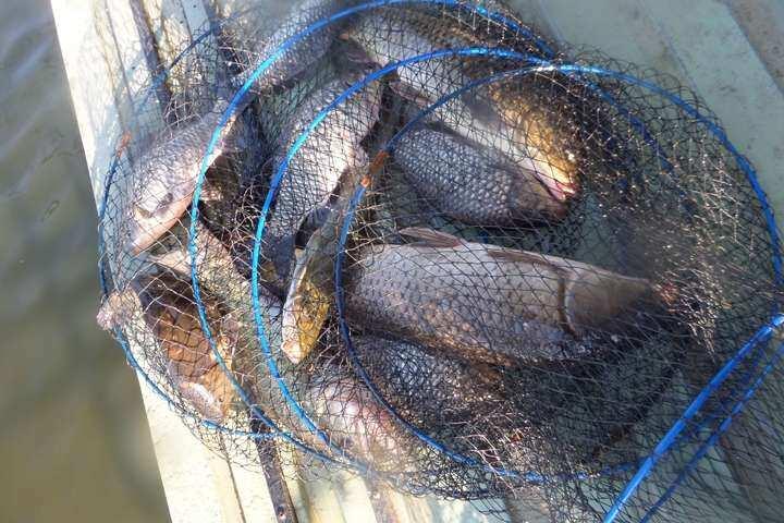 fish_pay_04044969.jpg