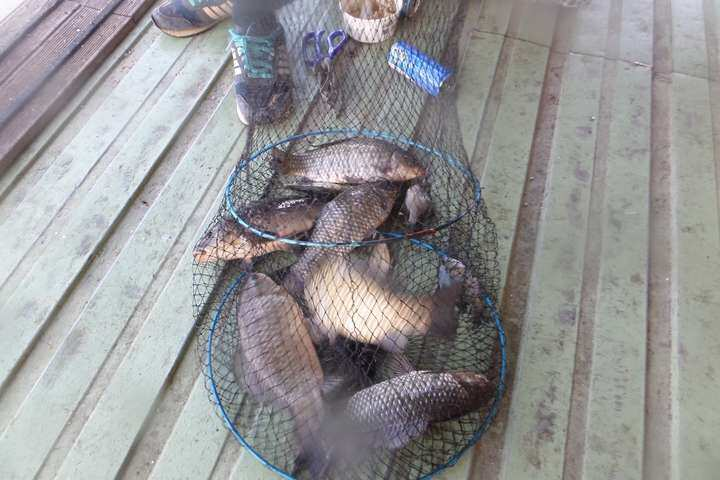 fish_pay_04050690.jpg