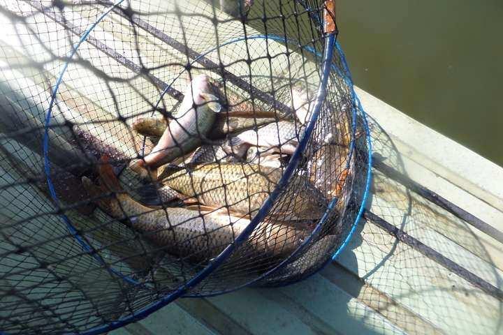 fish_pay_0405306.jpg