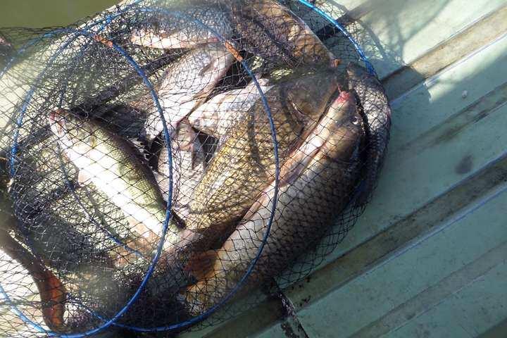 fish_pay_04053741.jpg