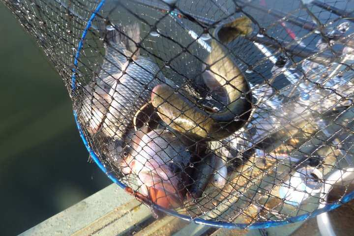 fish_pay_04060521.jpg