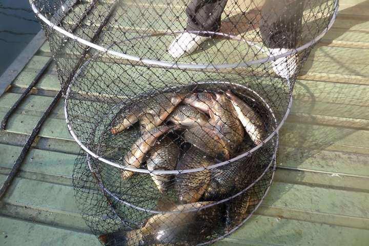fish_pay_04062782.jpg