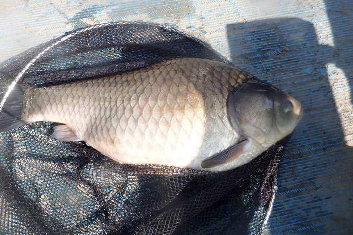 fish_pay_04063971.jpg