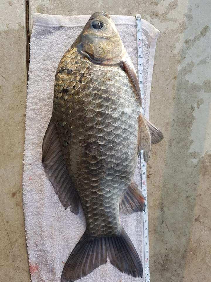 fish_pay_05432948.jpg